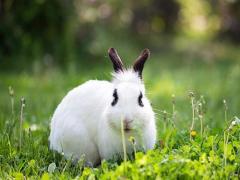 属兔人上等命的出生时辰是几点(图文)