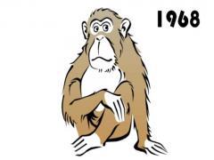 1980年属猴男性2021年运势80年41岁属猴人2021年每月运势(图文)