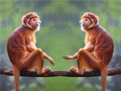属猴人42岁过七劫(图文)